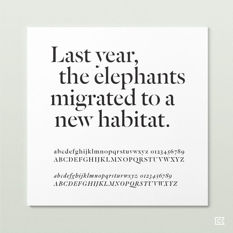 renderloyalty-typography01